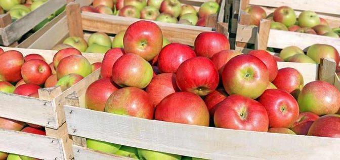 Apfel-Aktion 2021